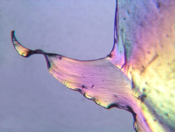 [ Colours of a small piece of plastic film as seen under polarized light ]