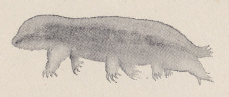 [Bärtierchen-Illustration, Kopie (G.C. Whipple, 1899)]